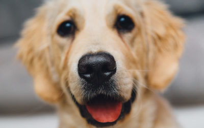 Could a Passion for Dogs Lead to a Nobel Prize?